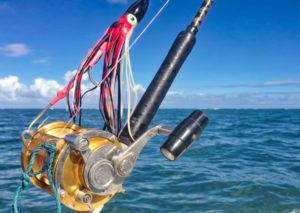 Bait, Deep Sea Fishing, Sports Fishing